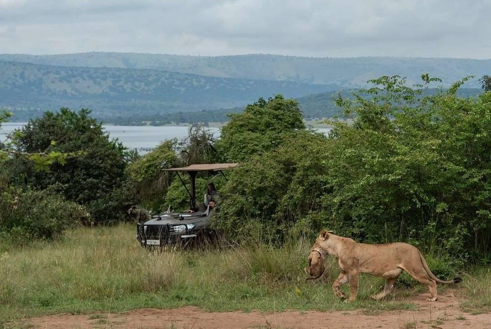 Game drive, Magashi Camp, Akagera National Park, Rwanda