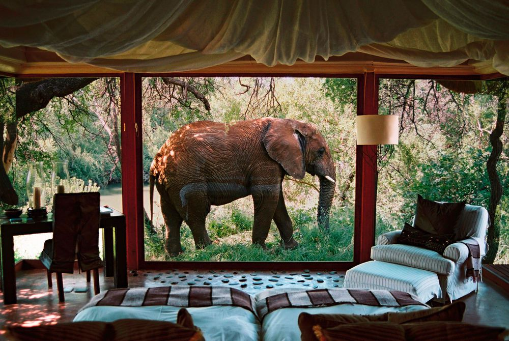 Sanctuary Makanyi Safari Lodge -Makanyane Elephant