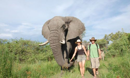 Walking with Elephants, Sanctuary Retreats