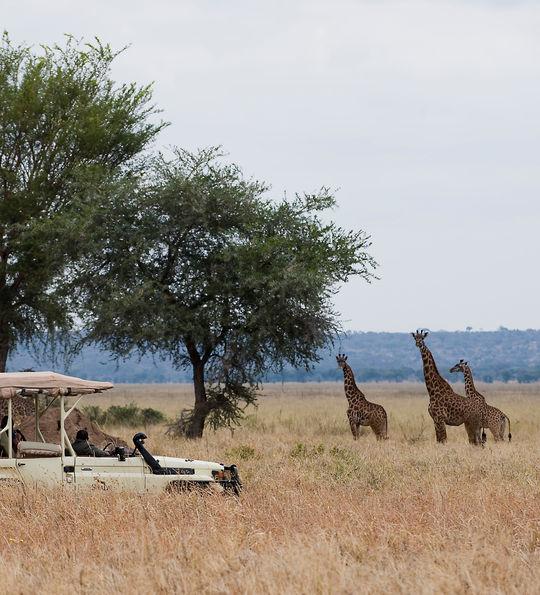 Sanctuary Swala, Tanzania
