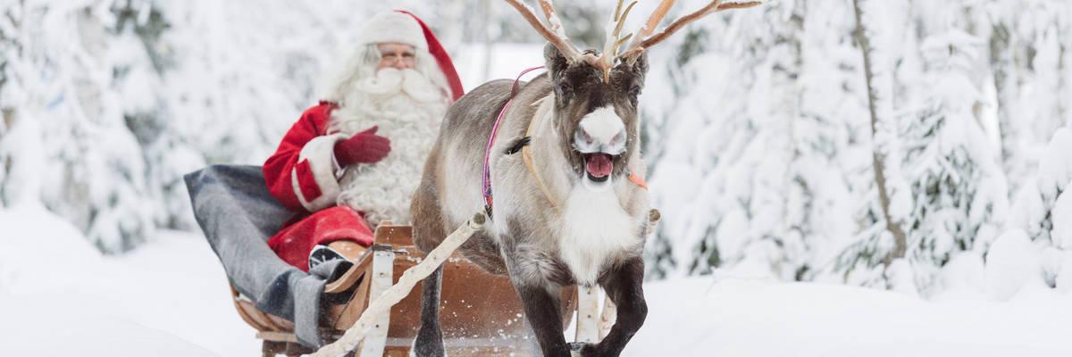 Santa's reindeer in Rovaniemi (Credit: Visit Rovaniemi)