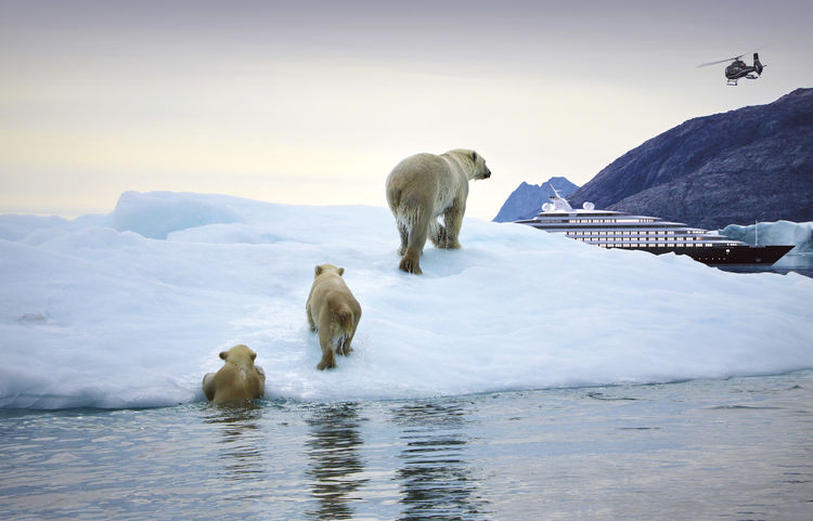 See wild polar bears on a Greenland holiday with Scenic Eclipse