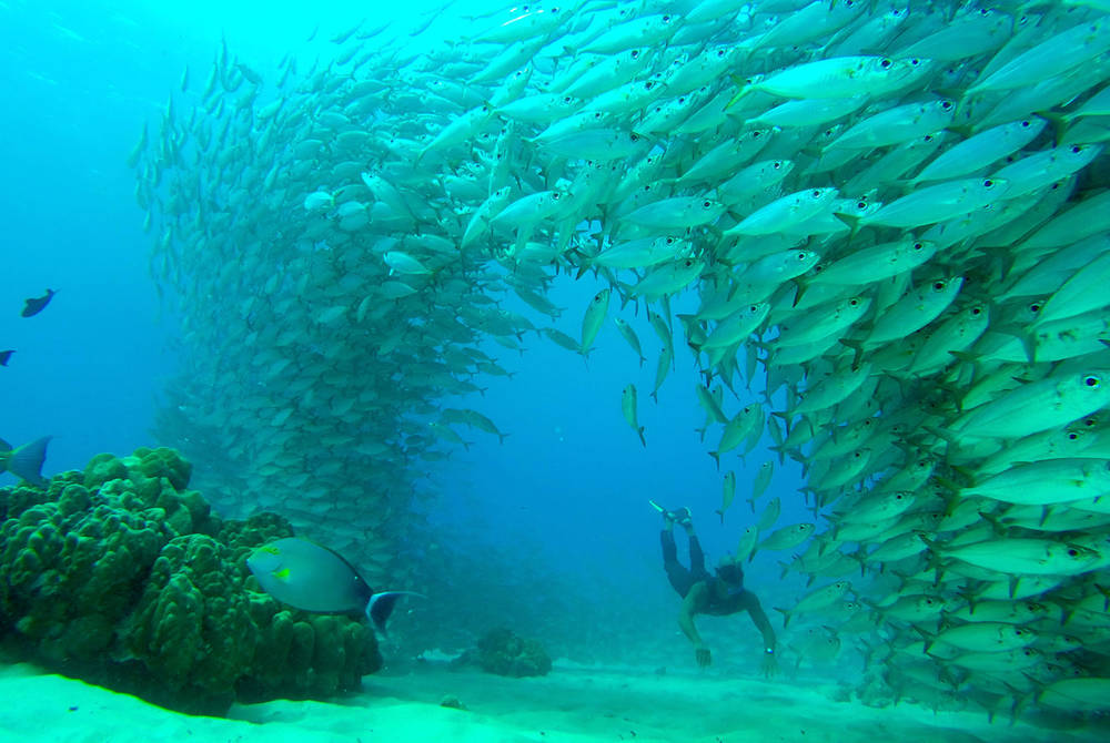 Scuba diving, Hawaii (Credit: Hawaii Tourism Authority)