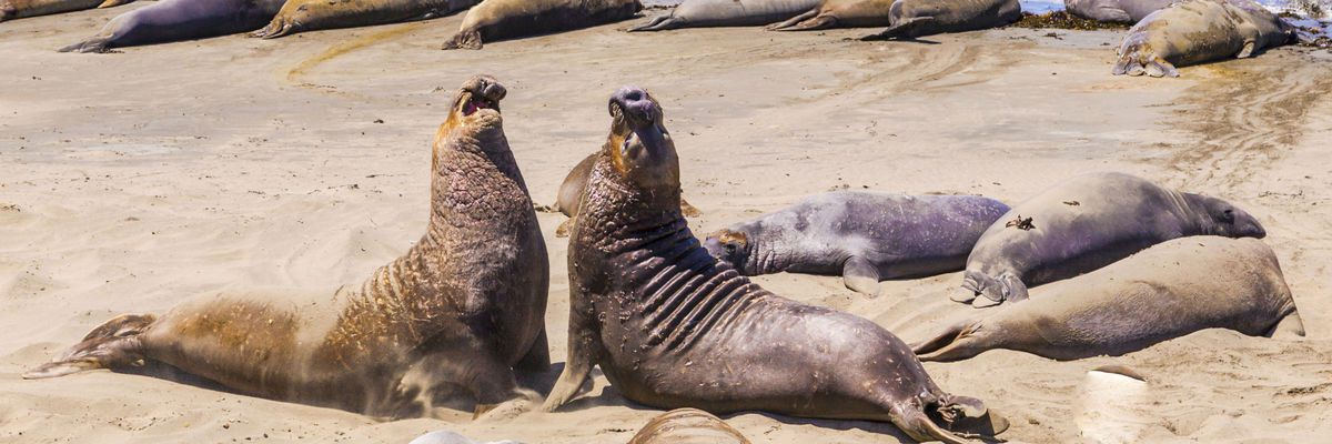 Sea Lions, California