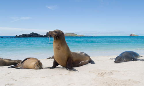 Sea Lions, Galápagos Islands, Ecuador