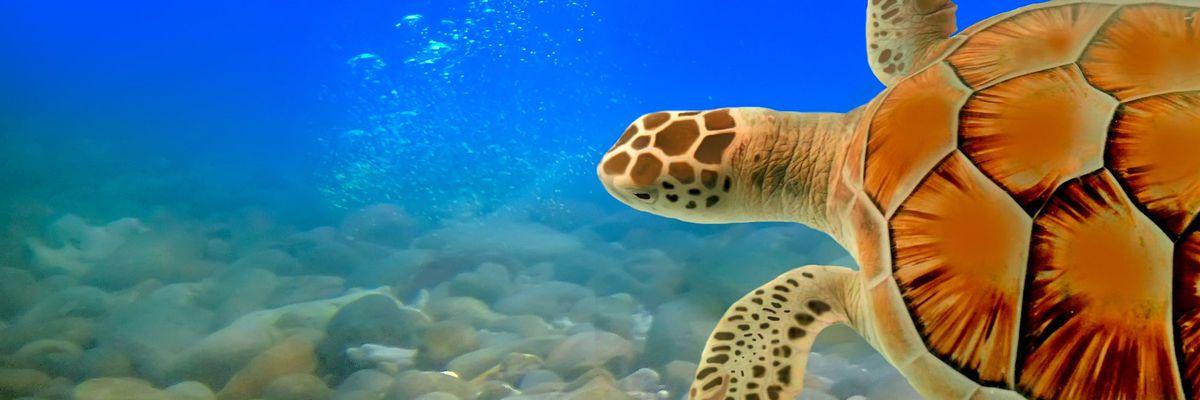 Silversea reveal Scuba Diving voyages