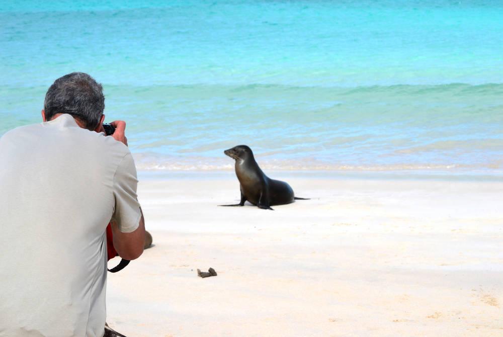 Sea lion, Ocean Spray