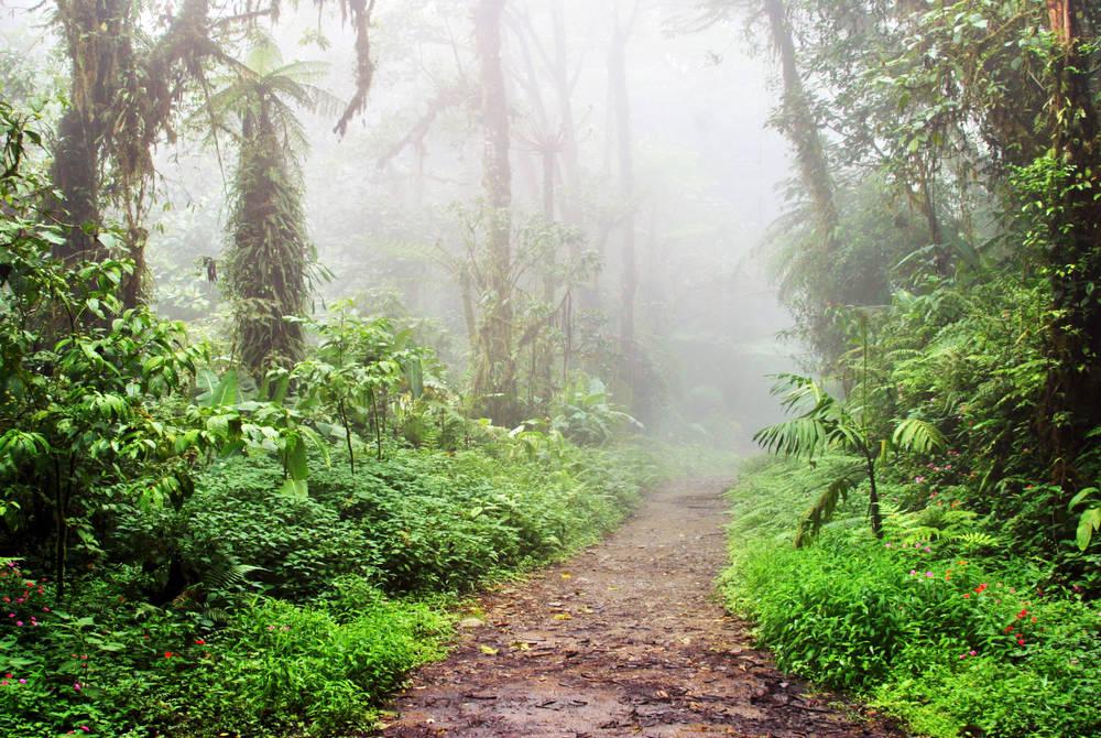 Forest trails, Senda Monteverde, Costa Rica