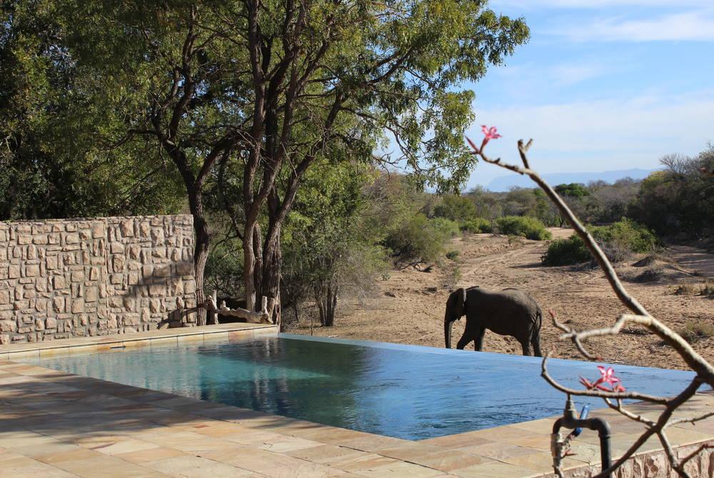 Elephant by the pool, Shumbalala Game Lodge