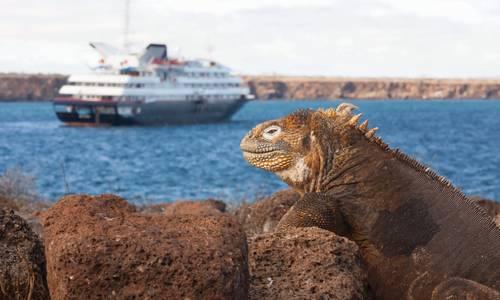 Silver Galápagos