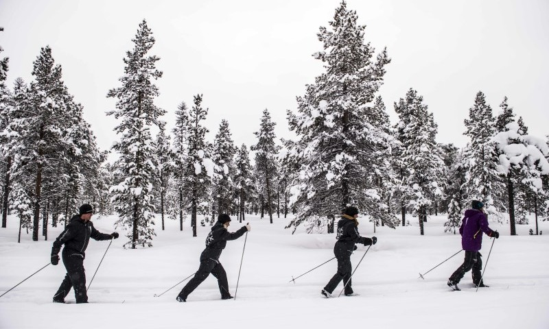 Cross-country Skiing in the Poikkijarvi Woods