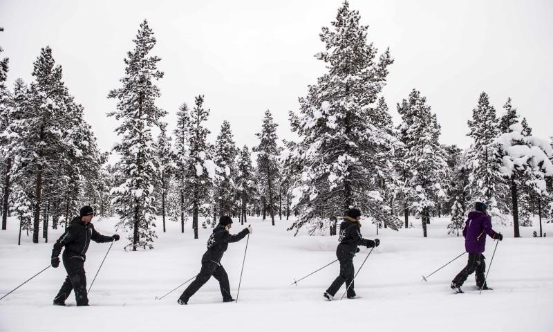 Cross-country Skiing in the Poikkijarvi Woods