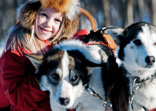 Sled Dog Ride in Winter Wonderland excursion, ICEHOTEL