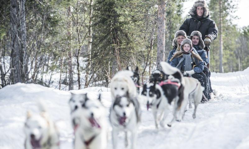 Sled Dog Ride in Winter Wonderland