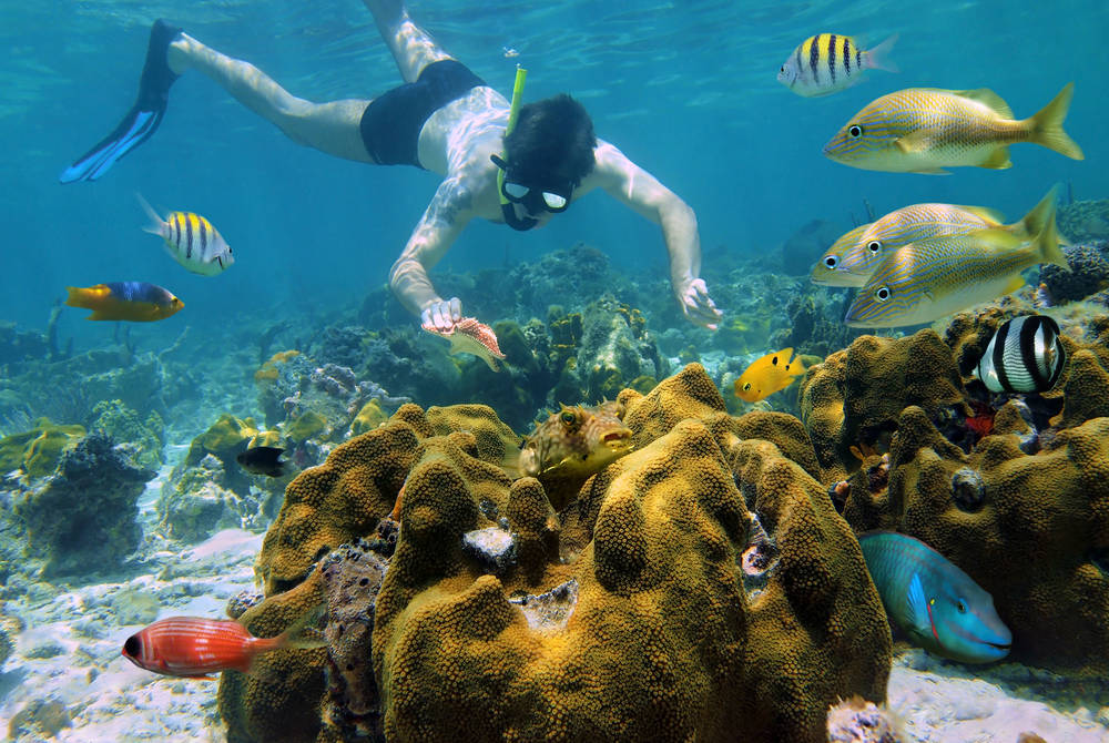 Snorkelling, Isla Cozumel