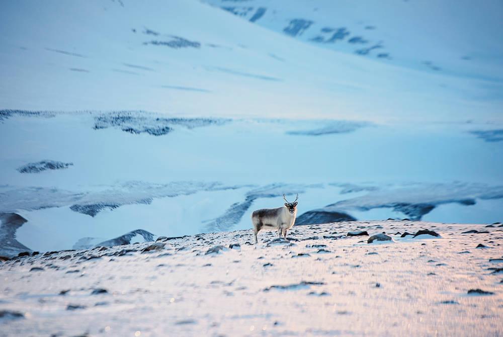 Snowmobiling to Elveneset (Credit: Agurtxane Concellon/Hurtigruten Svalbard)