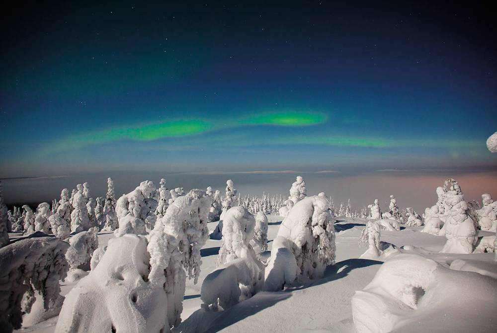 Snowtrees, Iso-Syote, Finland