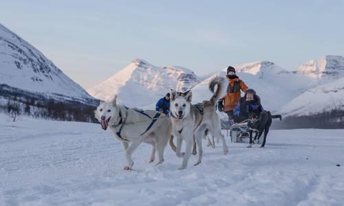 Wildlife, Huskies and Northern Lights on Sommarøy