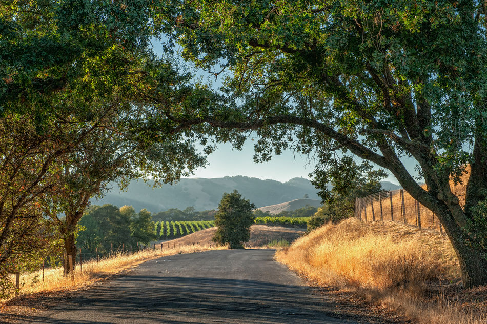 Sonoma County and vineyards in California
