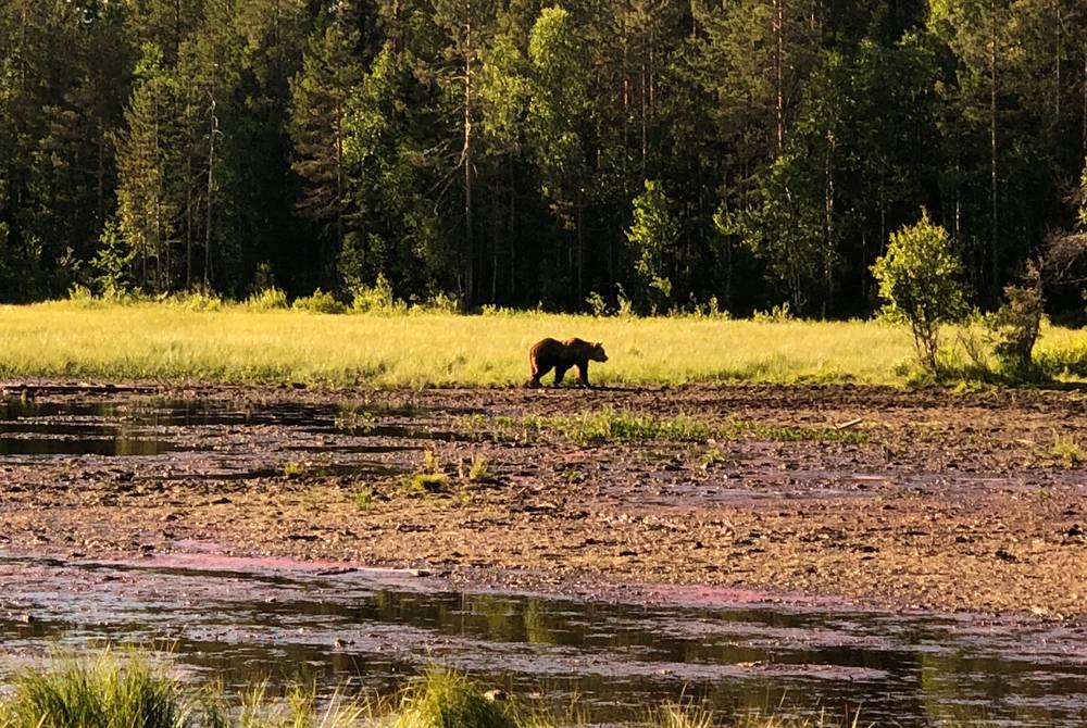 Sophie's bear watching trip, Finland