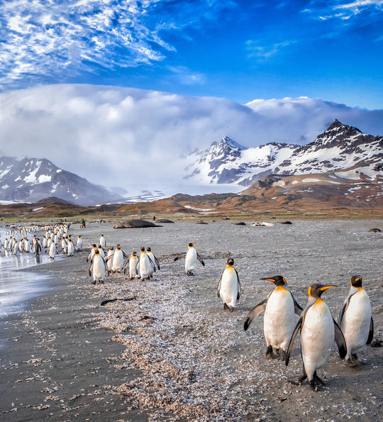 Penguin colony, Antarctica