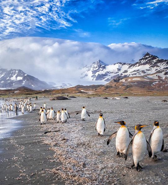 Penguin colony, Antarctica