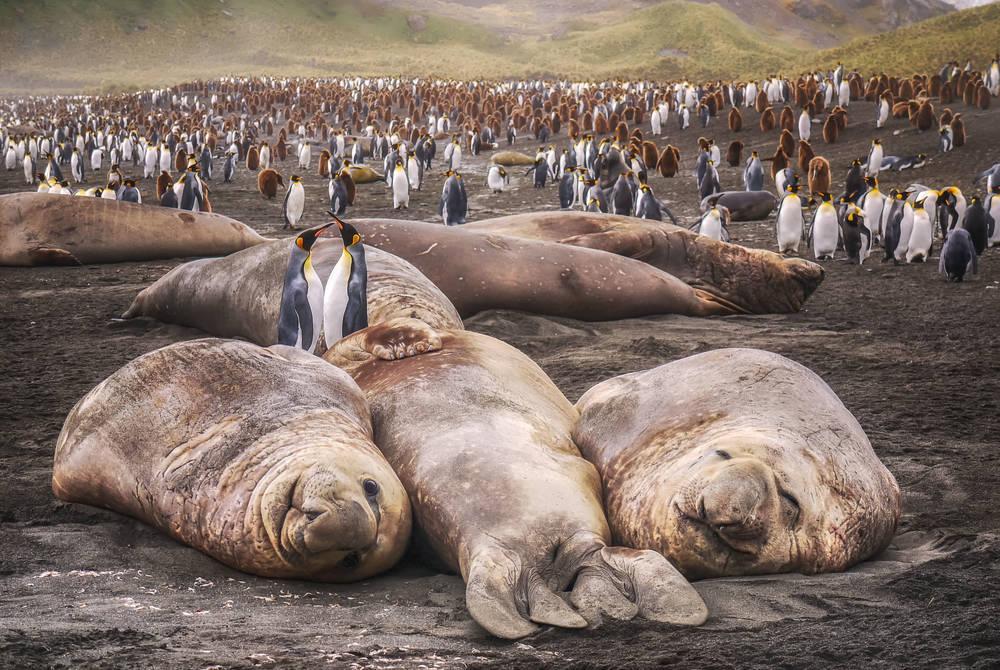 South Georgia, Antarctic