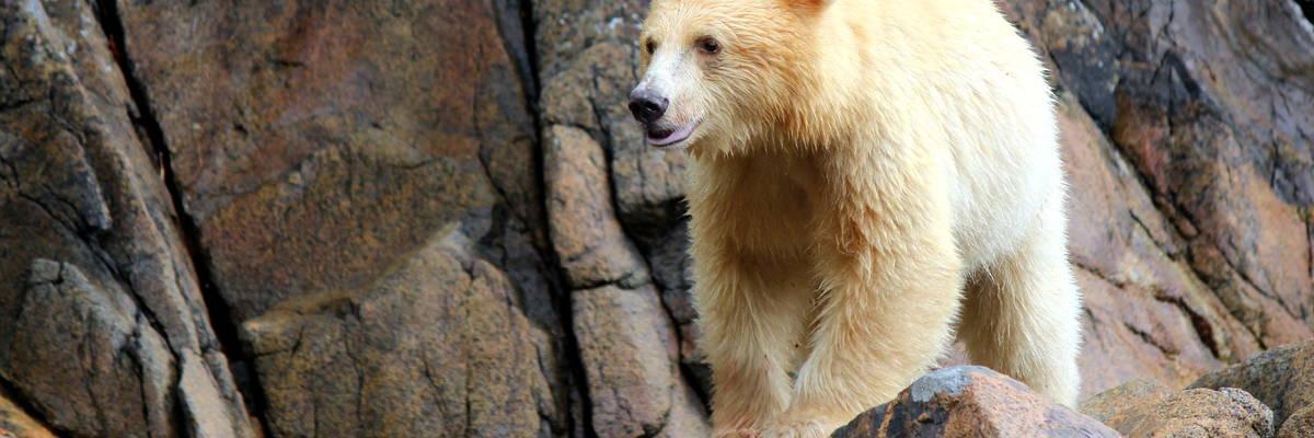 Spirit Bear Lodge, British Columbia, Canada