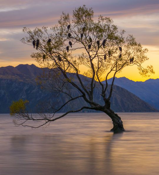 Sunrise at Lake Wanaka, New Zealand