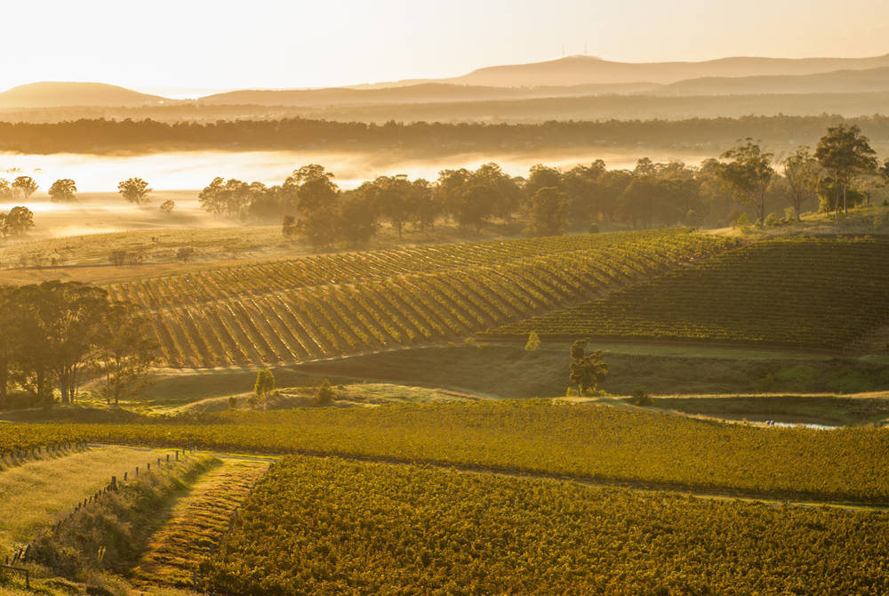 Sunrise over vineyards in the Hunter Valley