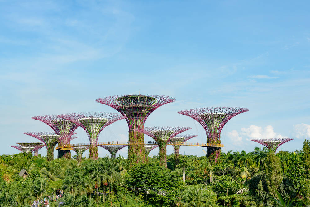 Supertrees, Singapore