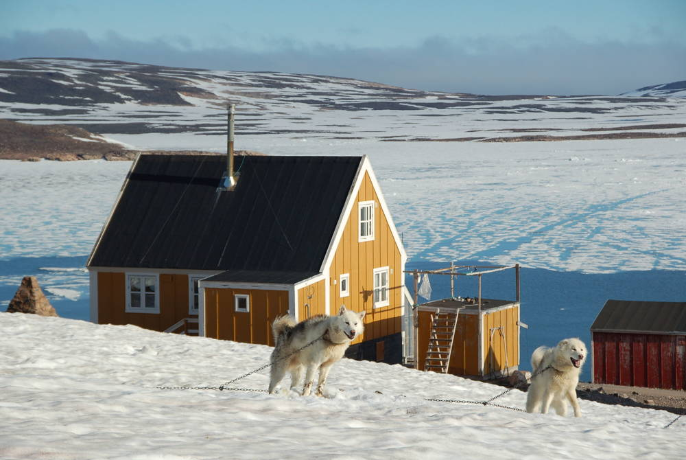 Huskies on Svalbard, Ponant