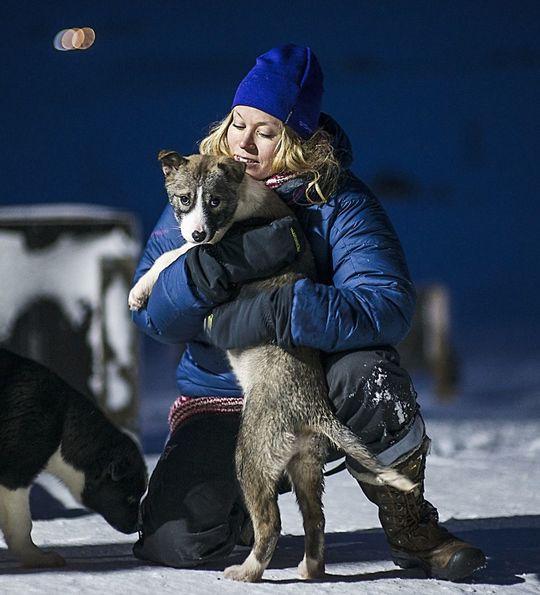 Huskies in Svalbard