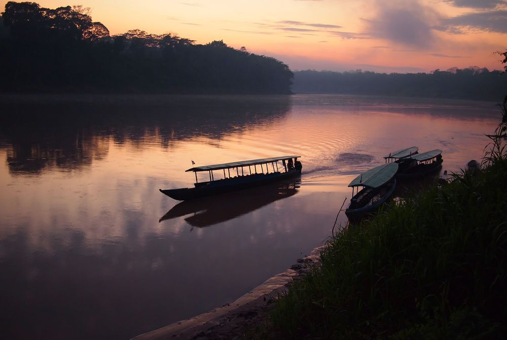 Tambopata Jungle, Amazon, Peru