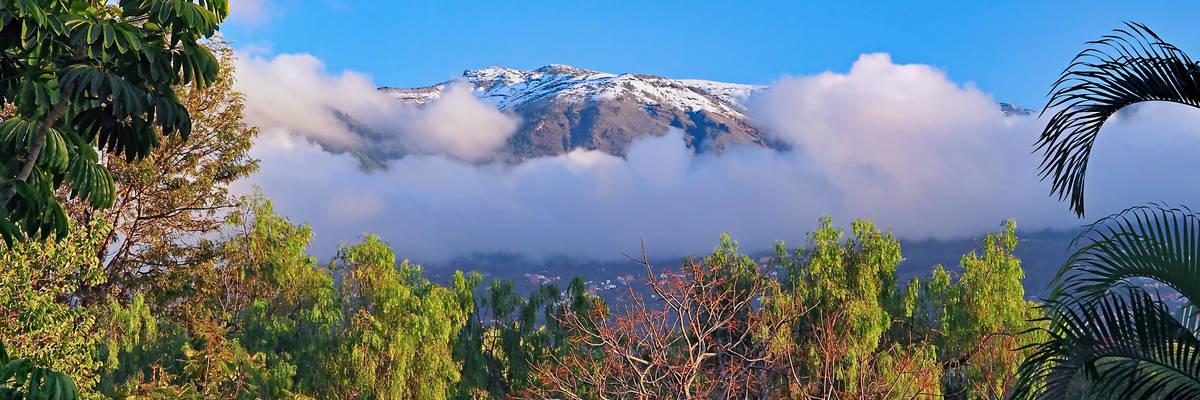 Taoro Park, Tenerife