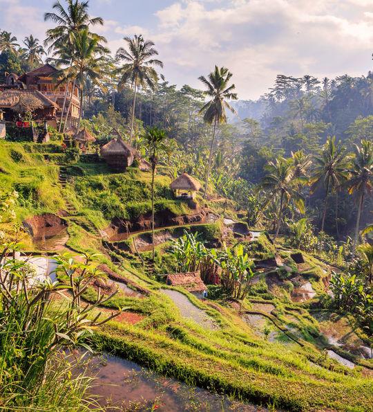 Tegalalang rice terrace, Ubud, Bali