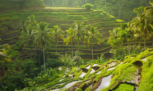 Tegallalang village, Ubud