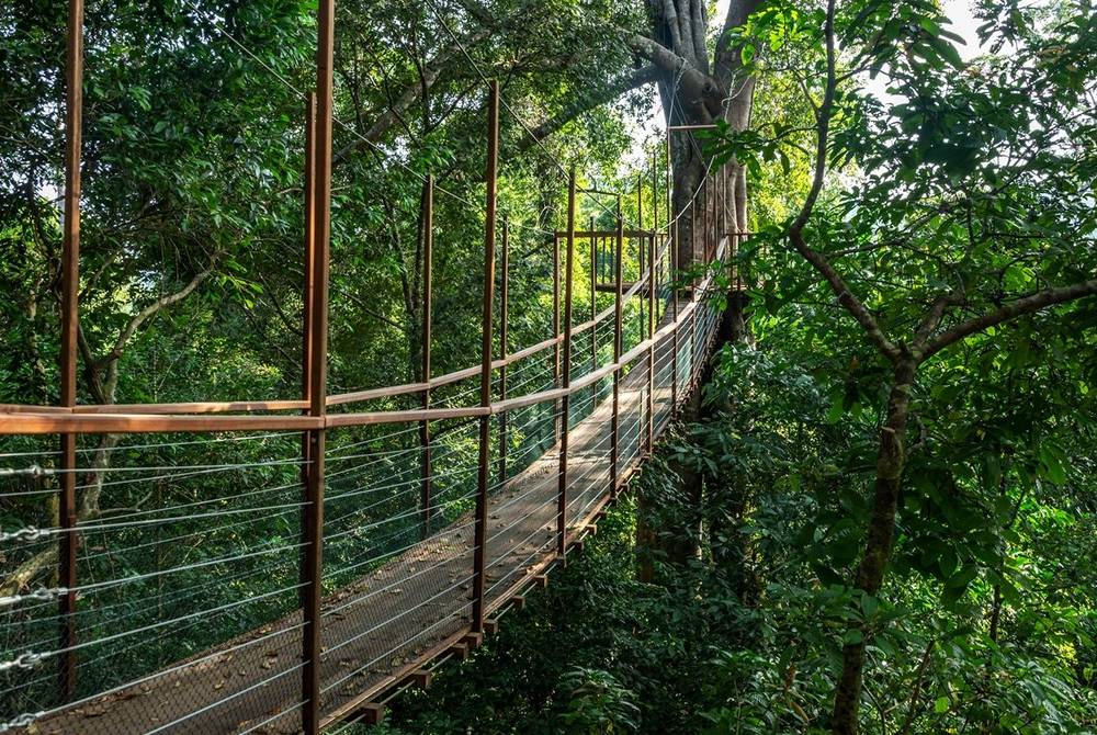 Canopy walk, The Datai Langkawi