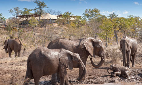 The Elephant Camp, The Victoria Falls, Zimbabwe