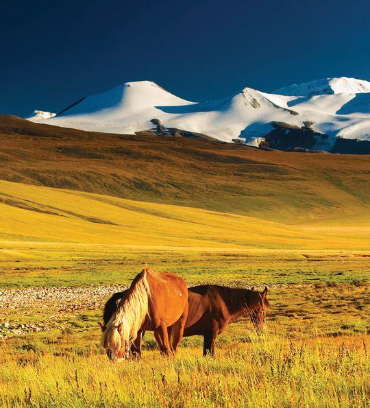The Mangolian Steep, Mongolia