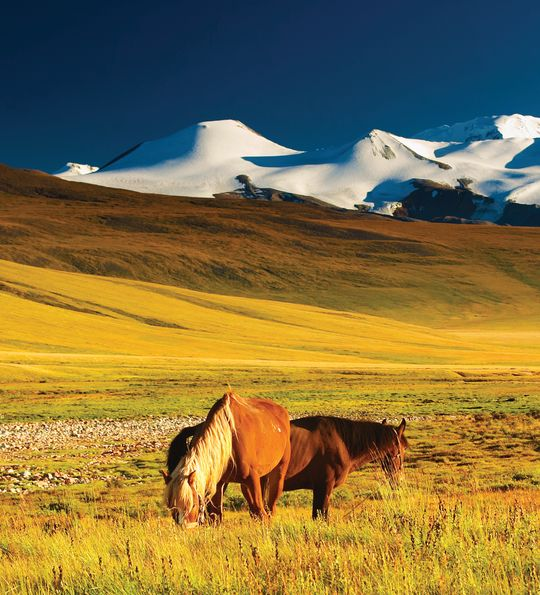 The Mangolian Steep, Mongolia