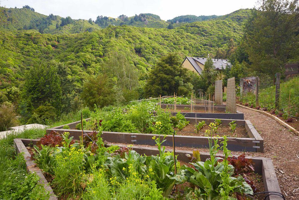 The Resurgence vegetable garden, New Zealand