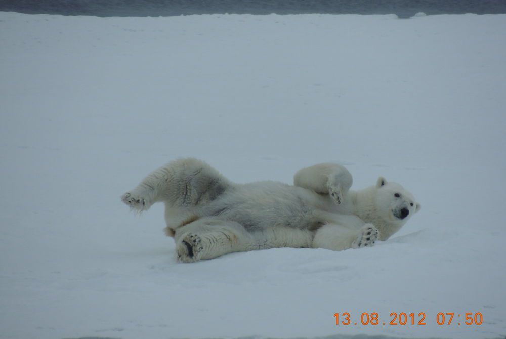 Tim's photography in the Arctic