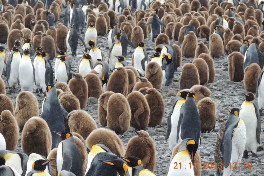 Tim's photography of South Georgia in Antarctica