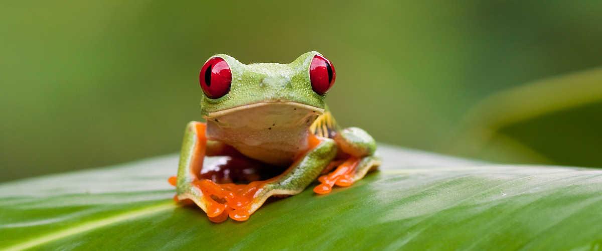 Go wild in Costa Rica