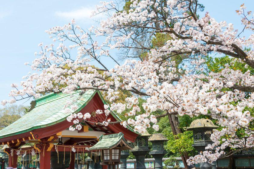 Ueno Toshogu Shrine, Ueno Park, Tokyo