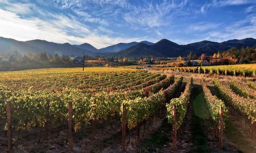 Vineyard -Tualitan Valley