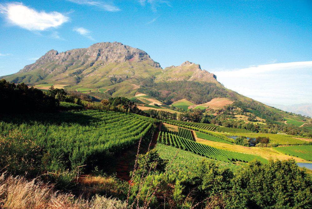 Vineyard, Franschoek, South Africa