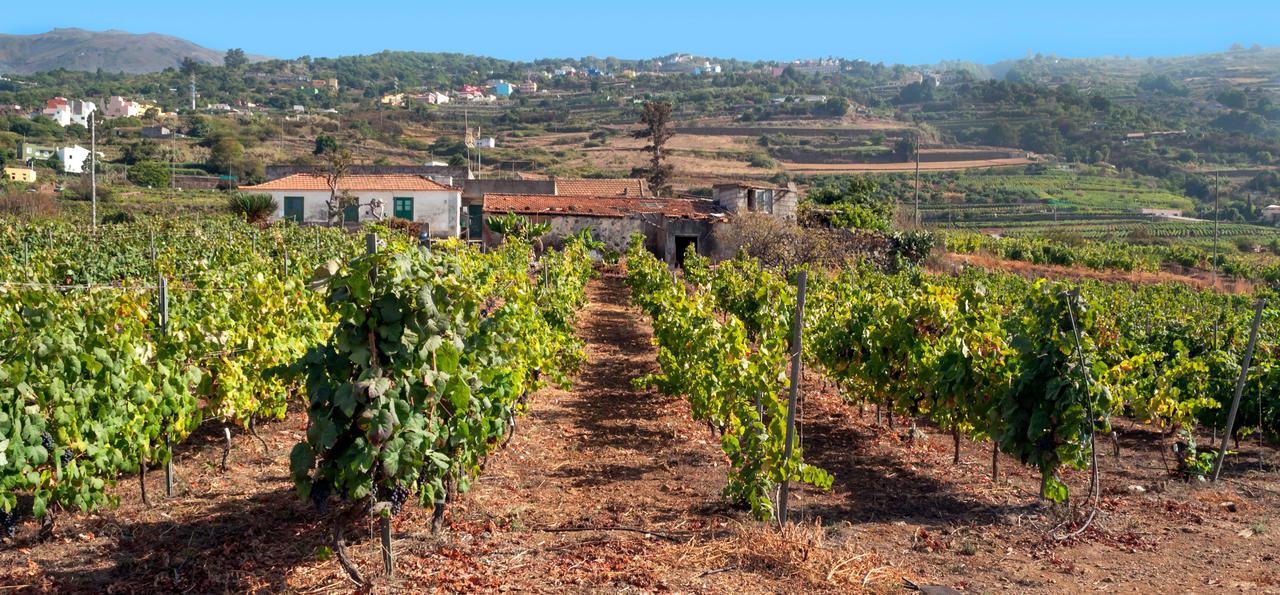 Vineyard, Tenerife