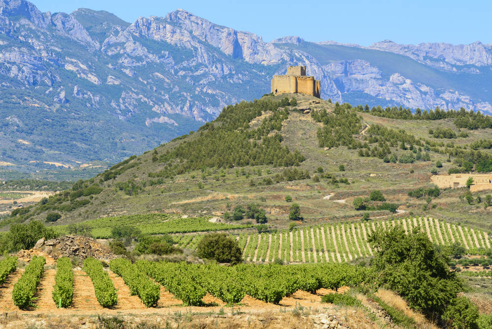Vineyard and Davalillo Castle, La Rioja